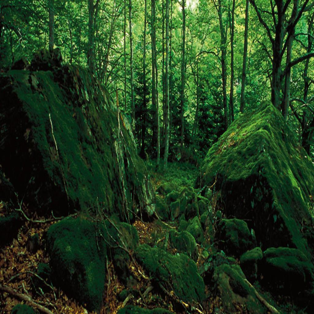 Resultado de imagen de Flora valle de aran